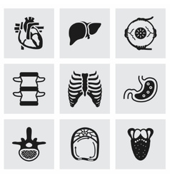 Anatomy icon set vector