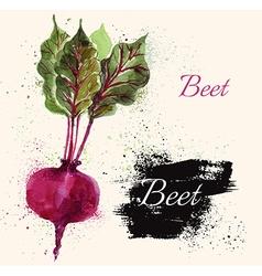 Beet in watercolor technique vector