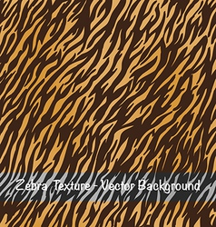 Zebra texture background vector