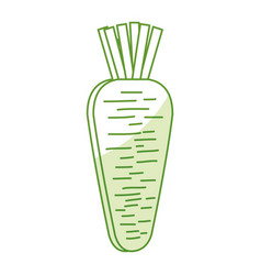 carrot fresh vegetable icon vector image vector image