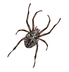 Big spider with cross-shaped drawing on a black vector
