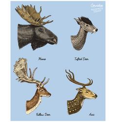 Moose or eurasian elk tufted deer roe or doe vector