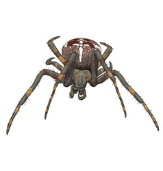 Portrait scary spider vector