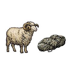 Sketch cartoon horned ram cutted wool vector