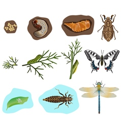 Metamorphosis of insects vector image