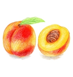 Color pencils - sweet peach vector