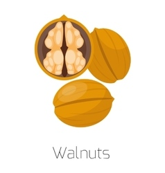 Pile of nuts walnuts vector
