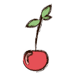 Red vegetable cherry icon vector