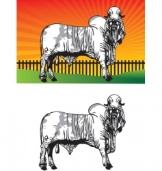 ox pasture vector image