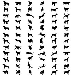 Breeds of dogs vector