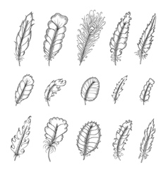 Hand drawn vintage feathers set Pen graphic vector image