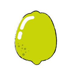 lemon fruit food vector image