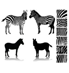 Zebra 1 vector