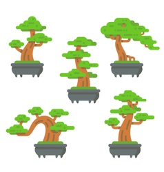 Flat design bonsai tree set vector