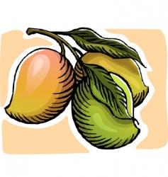 mangoes vector image vector image