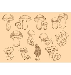 Fresh edible mushrooms engraving sketch symbols vector