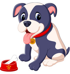 pit bull dog vector image