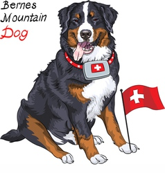 Happy bernese mountain dog with a first aid kit vector