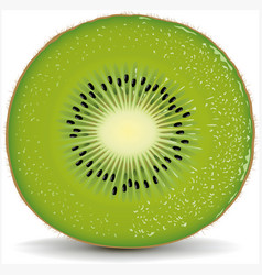 Exotic kiwi with fresh water drops vector