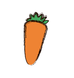 orange vegetable carrot icon vector image