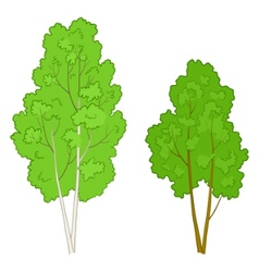 Trees deciduous vector