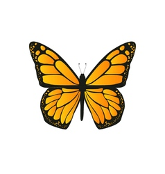 The butterfly with orange wings vector image vector image