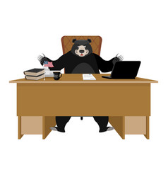 Baribal american black bear sitting in office vector
