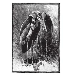 Greater adjutant stork vintage engraving vector