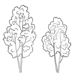 Trees deciduous outline vector