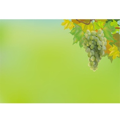 Summer autumn grapes postcard vector image