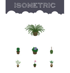 Isometric flower set of blossom houseplant fern vector