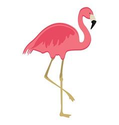 Pink flaming bird vector