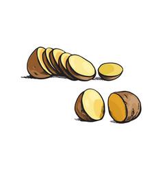 sketch ripe raw unpeeled sliced potato vector image