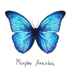 Butterfly Watercolor vector image vector image