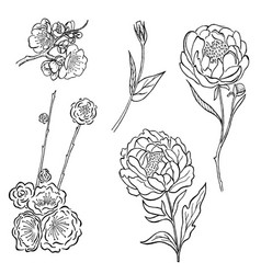 collection of hand drawn peony and rose vector image vector image