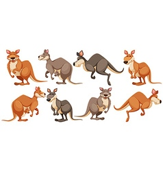 Kangaroo in different poses vector