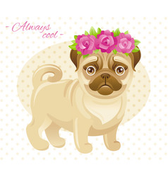 Summer fashion pug puppy dog in sweet clothes vector