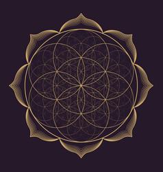 mandala sacred geometry vector image