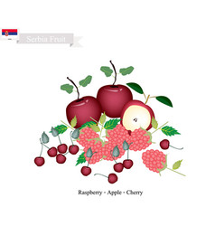 Raspberry apple and cherry the famous fruits of vector