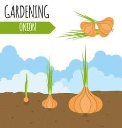 Garden onion plant growth vector