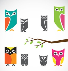 group of owls and branch vector image vector image