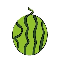 Juicy watermelon fruit nature drawing vector