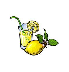 lemonade glass with straw lemon slice vector image vector image