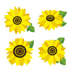 set of colored sunflowers vector image