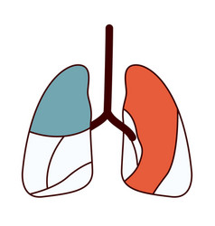 Color sections contour respiratory system vector
