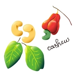Colorful cartoon cashew vector