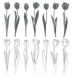 Set of tulips vector