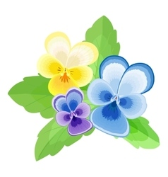 Pansies on white vector image