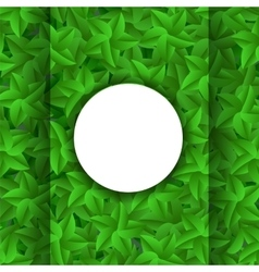 Green leaves pattern evergreen hedgegrow vector