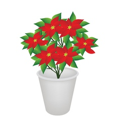 Exotic Red Flowers Plant in Flower Pot vector image vector image